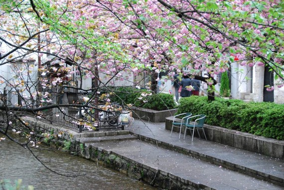 Canal et arbres de Kyoto (1)