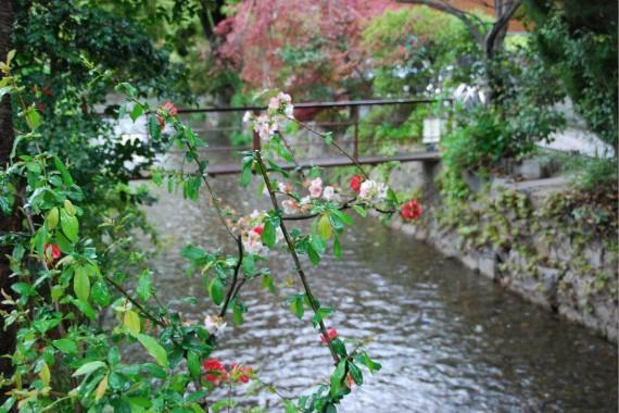Canal et arbres de Kyoto (10)