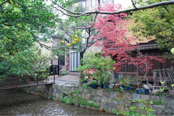Canal et arbres de Kyoto (11)