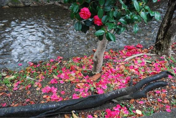 Canal et arbres de Kyoto (13)