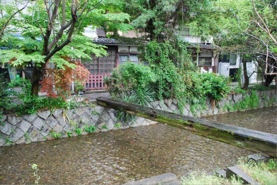 Canal et arbres de Kyoto (14)