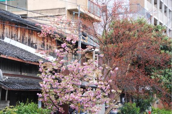 Canal et arbres de Kyoto (16)