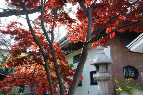 Canal et arbres de Kyoto (17)