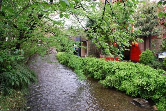 Canal et arbres de Kyoto (2)