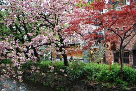 Canal et arbres de Kyoto (4)