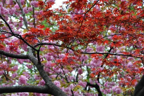 Canal et arbres de Kyoto (6)