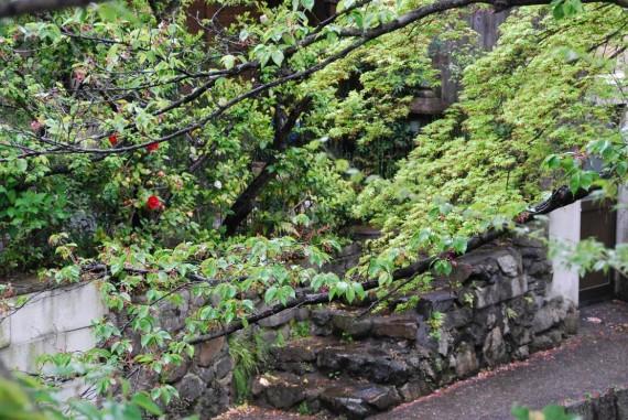 Canal et arbres de Kyoto (9)