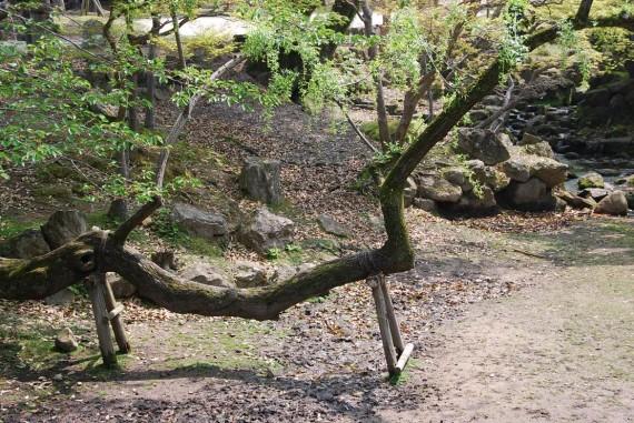 Le parc de Nara (1)