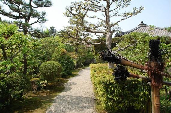 Le parc de Nara (10)