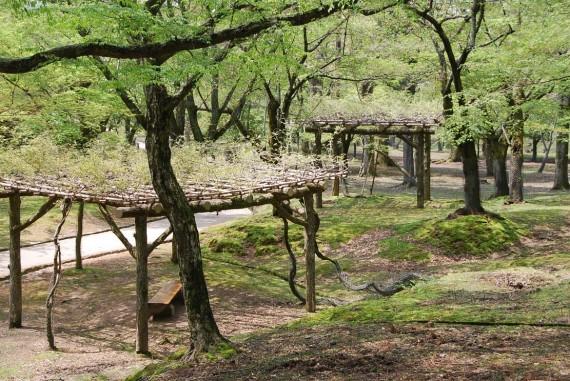 Le parc de Nara (11)