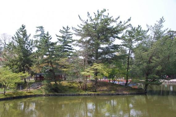 Le parc de Nara (2)