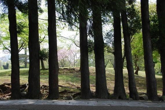 Le parc de Nara (3)