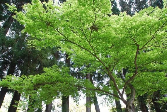 Le parc de Nara (4)