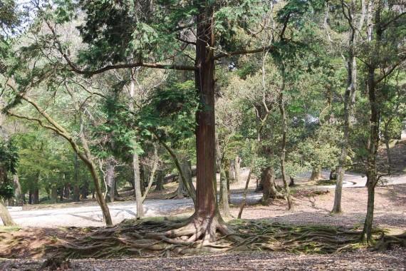 Le parc de Nara (5)