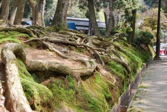 Le parc de Nara (6)
