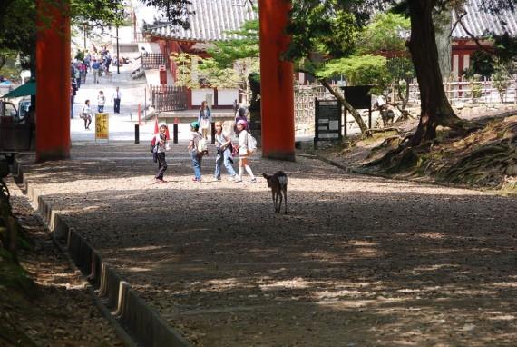 Les biches de Nara (7)