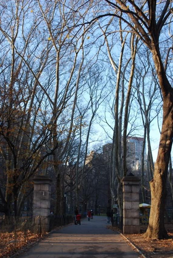 Central Park New York (10)