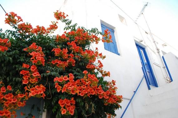 Bleu blanc rouge à Mykonos (6)