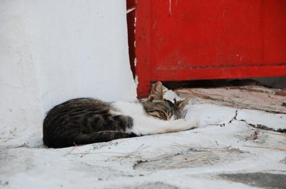 Les chats sauvages de Mykonos (2)