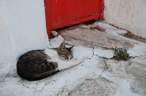 Les chats sauvages de Mykonos (3)