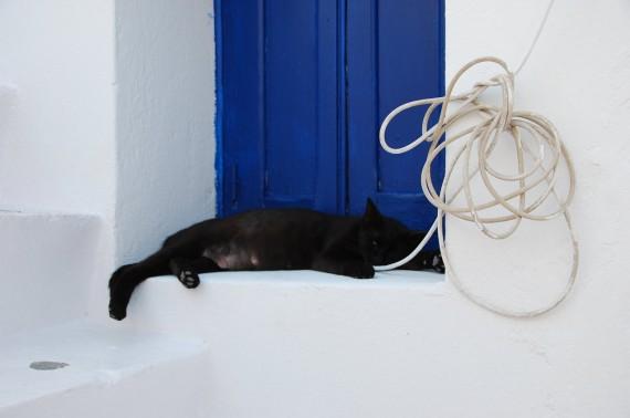 Les chats sauvages de Mykonos (6)
