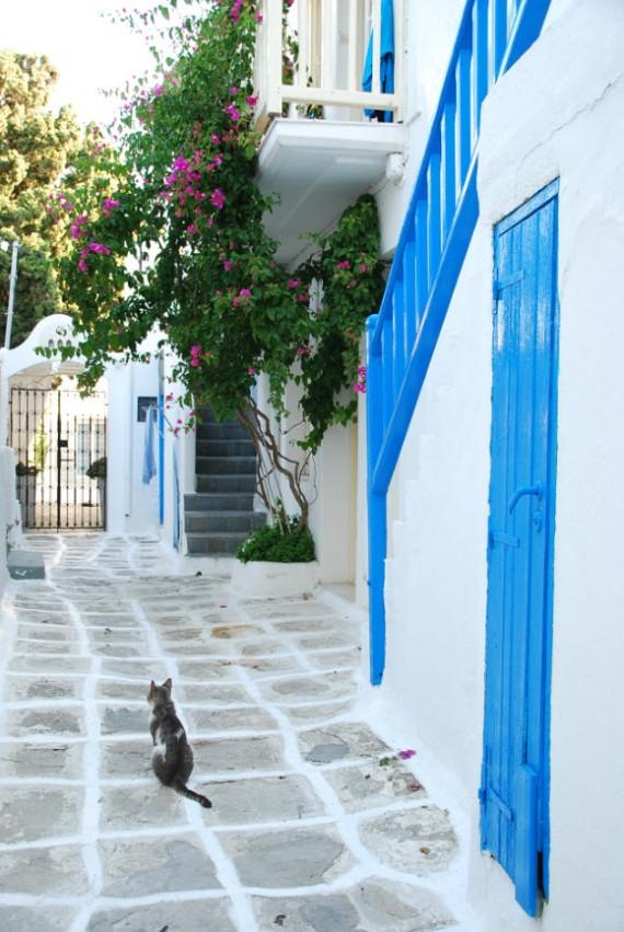 Les chats sauvages de Mykonos (7)