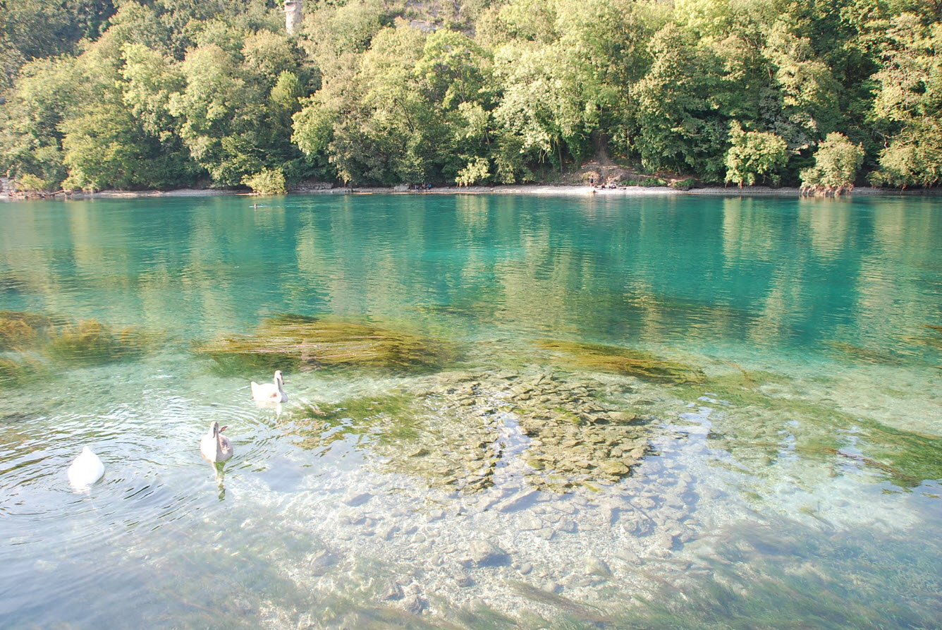 Baignade naturelle Geneve