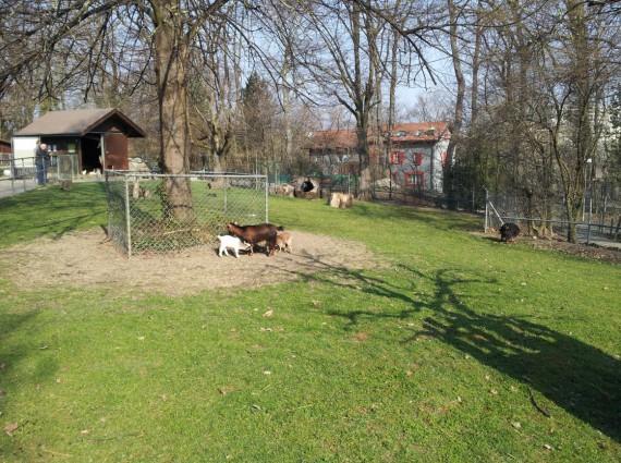 Bois de la Bâtie Genève (12)