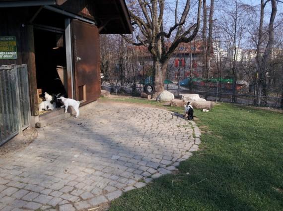 Bois de la Bâtie Genève (14)