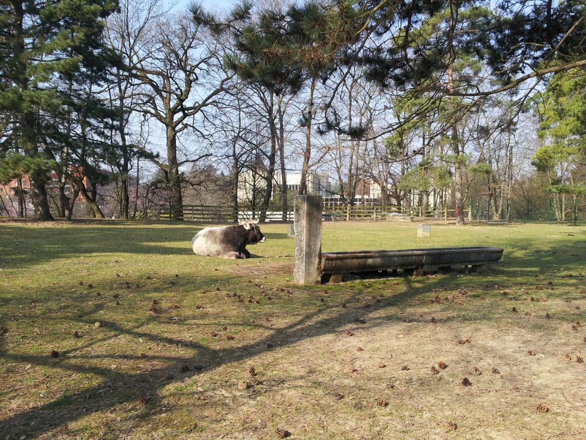 Parc animalier dans le centre de gen ve inspiration for for Parc animalier dans les yvelines