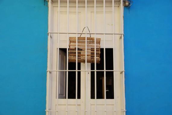 Oiseaux maisons Cuba (1)