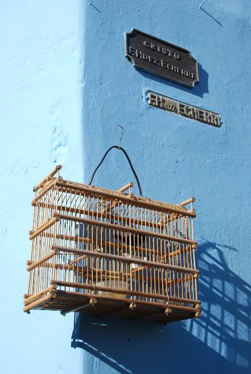 Oiseaux maisons Cuba (3)