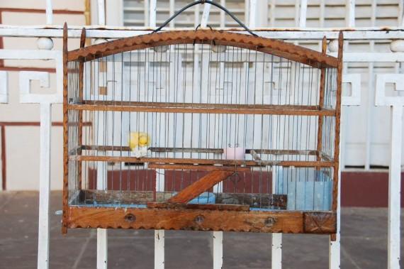 Oiseaux maisons Cuba (4)