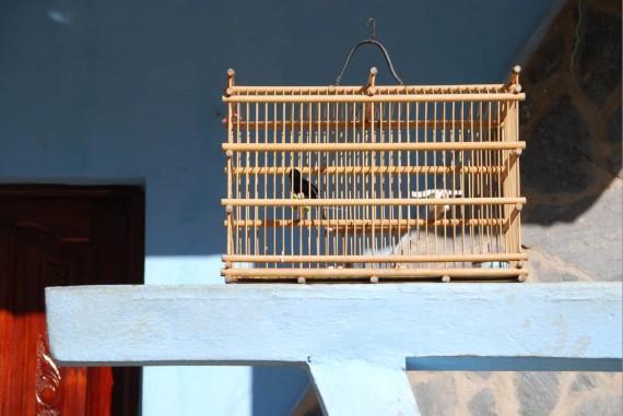 Oiseaux maisons Cuba (5)