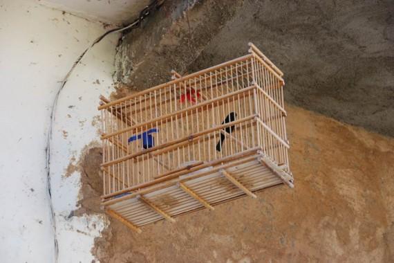 Oiseaux maisons Cuba (6)