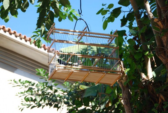 Oiseaux maisons Cuba (8)