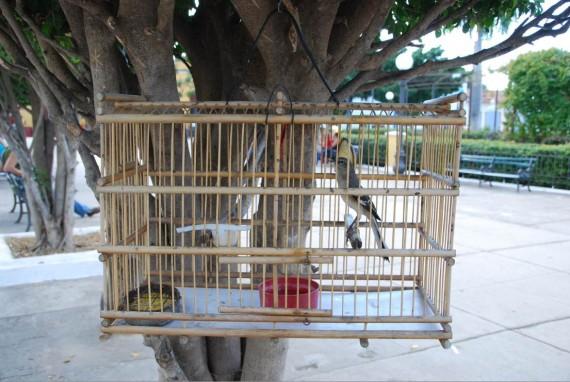 Oiseaux maisons Cuba (9)