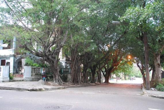 Quartiers Université Vedado La Havane (41)