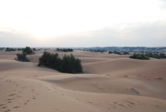 Al Maha camel ride (13)