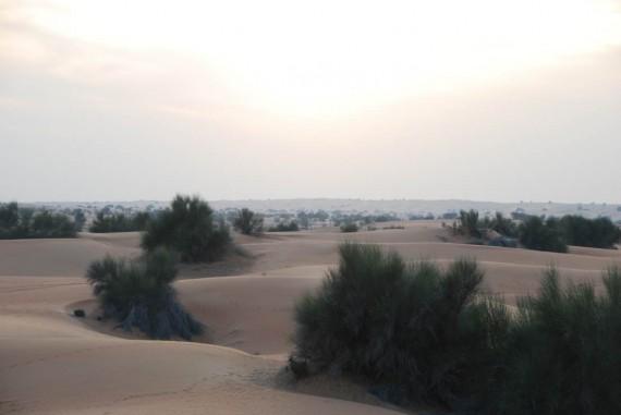 Al Maha camel ride (14)