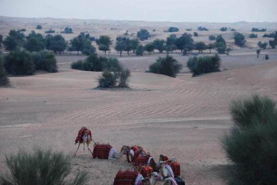 Al Maha camel ride (16)