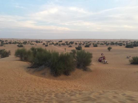 Al Maha camel ride (6)