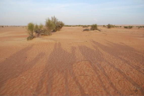 Al Maha camel ride (9)