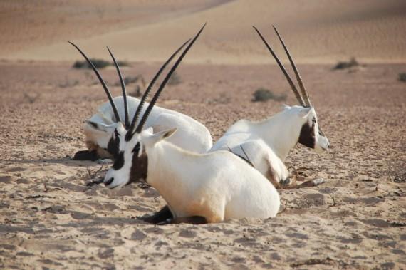 Desert Conservation Reserve Dubai (1)