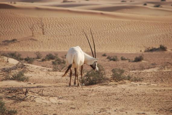 Desert Conservation Reserve Dubai (10)