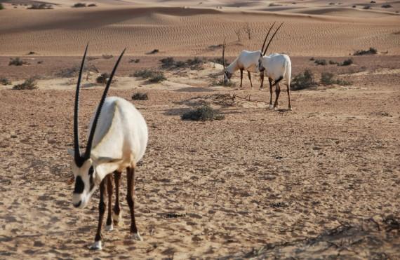 Desert Conservation Reserve Dubai (3)