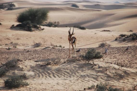 Desert Conservation Reserve Dubai (4)