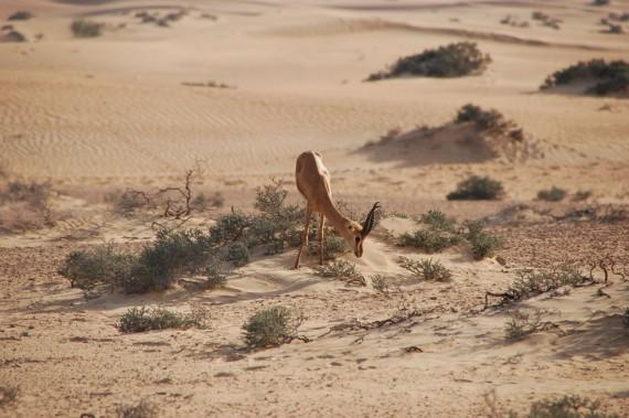 Desert Conservation Reserve Dubai (9)