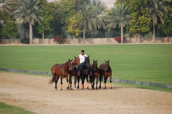 Polo Club Dubai 06