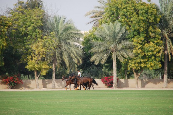 Polo Club Dubai 14